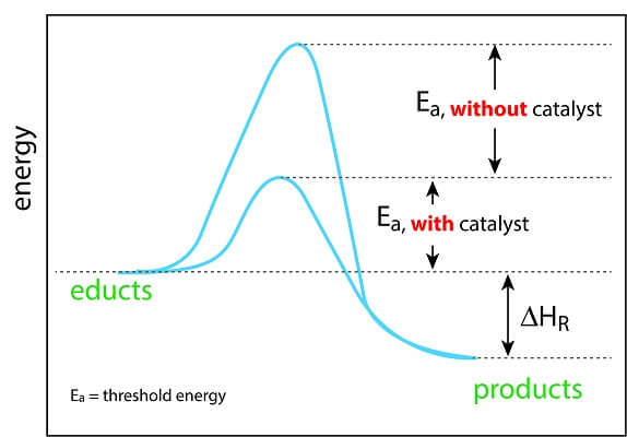 Enzymes can reduce activation energy, allowing reactions to happen quickly and efficiently.