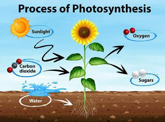 The inputs and outputs of photosynthesis