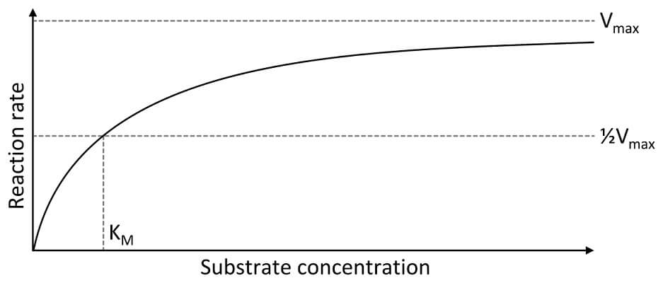 A graph of substrate concentration vs reaction rate shows how enzymes speed up as concentration is increased, but this is limited by the capacity of the enzyme