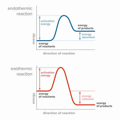 Exothermic reactions release energy, whereas endothermic reactions absorb energy. These reactions can be coupled to minimize energy lost to heat