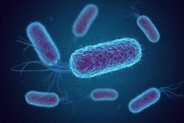 Bacteria are unicellular organisms