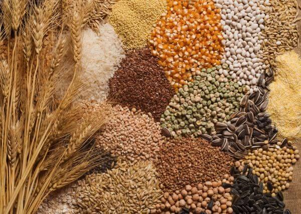 Maltose is found in grains