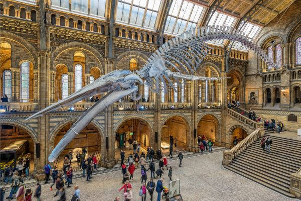 The Natural History museum of London