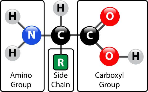The structure of an amino acid