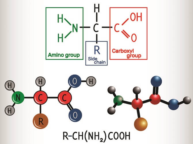 amino acid structure carboxy amine R group side