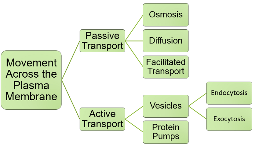 types cell membrane transport
