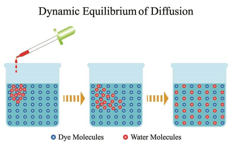 diffusion molecules water semi-permeable membranedynamic equilibrium