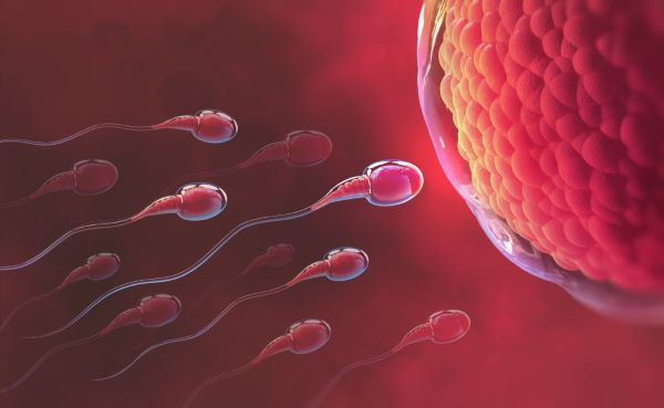 Gametes are produced by meiosis