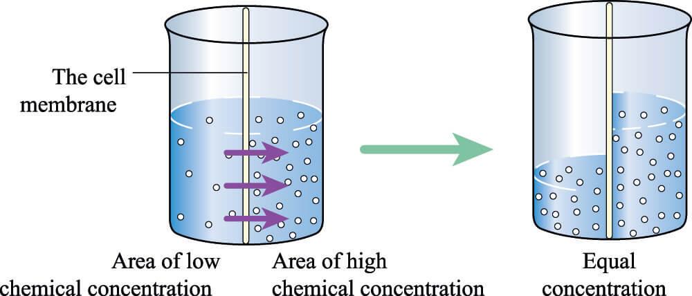 osmosis osmolarity osmolality semi-permeable membrane water molecules passive transport