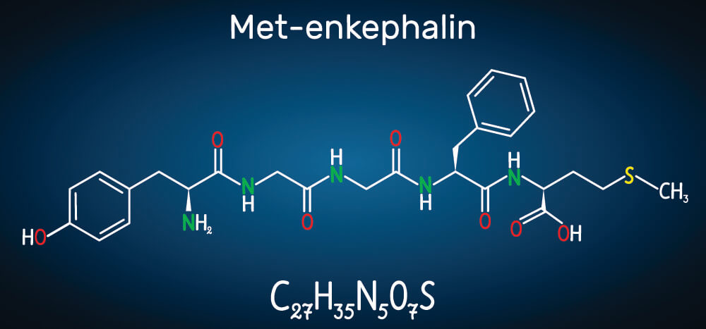 met-enkephalin polypeptide oligopeptide pentapeptide