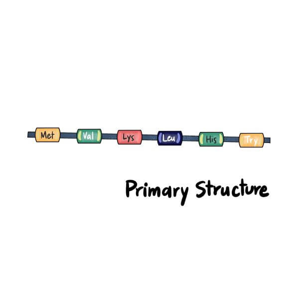 The primary structure of a protein