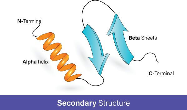 The secondary structure of a protein