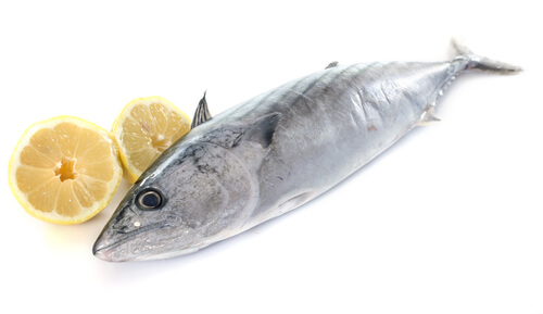 A single bonito resting against a sliced lemon isolated on a white backdrop