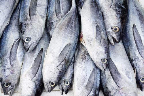 Several skipjack tuna displayed on ice as if at a frozen fish market