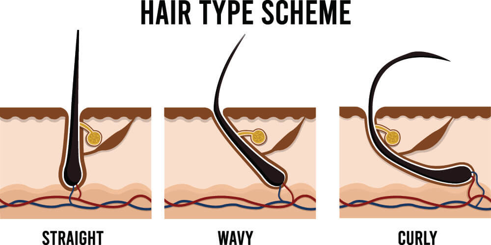 hair curly kinky straight wavy phenotype codominance