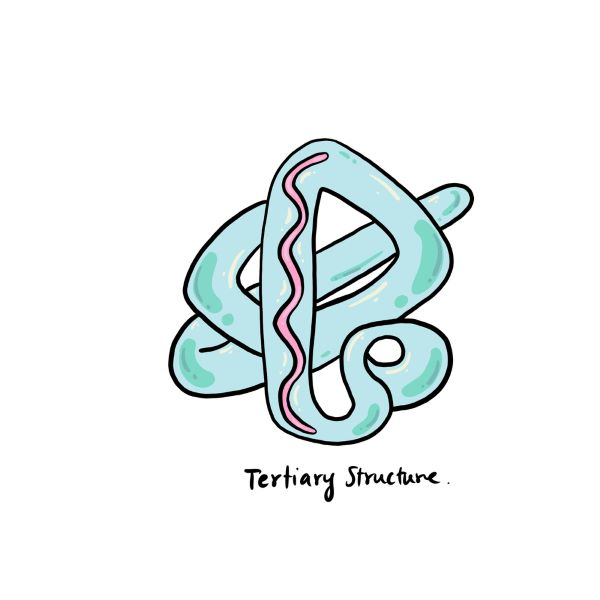 The tertiary structure of a protein