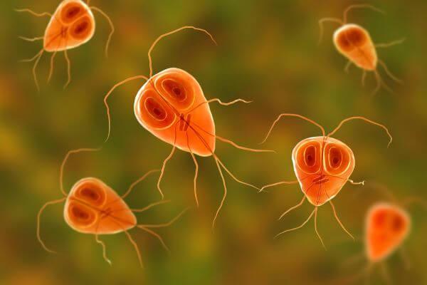 Flagellates are protozoans with flagella