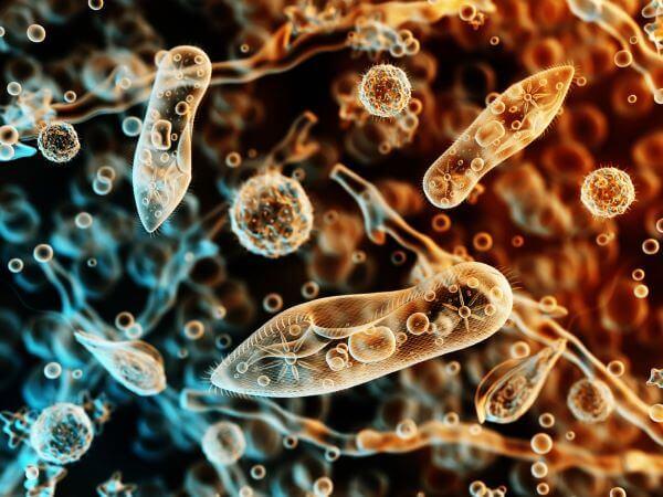 Animal-like protists are called protozoa