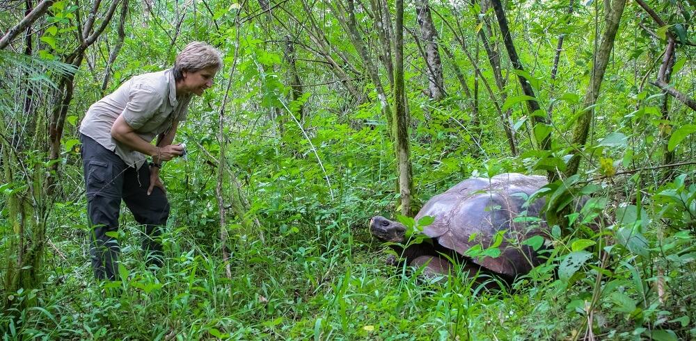 galapagos giant tortoise darwin reptile