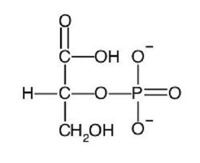 2-phosphoglycerate molecule glycolysis cellular respiration