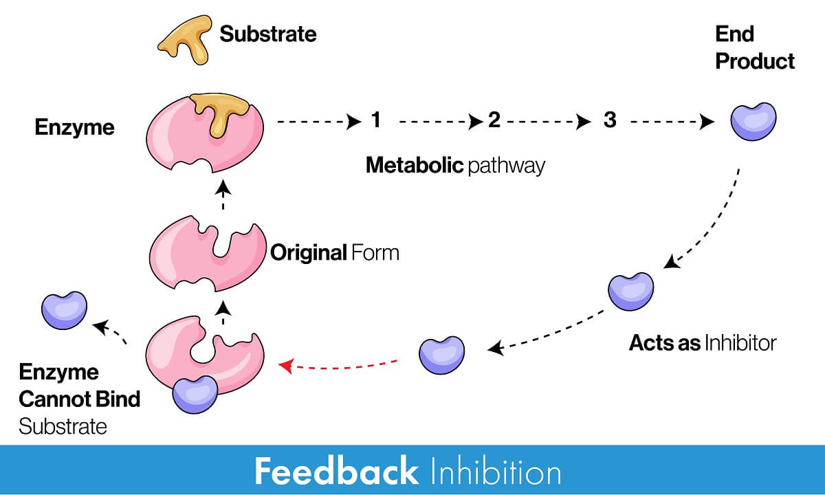 Feedback inhibition is a specific type of negative feedback involving enzyme inhibitors created by a metabolic pathway