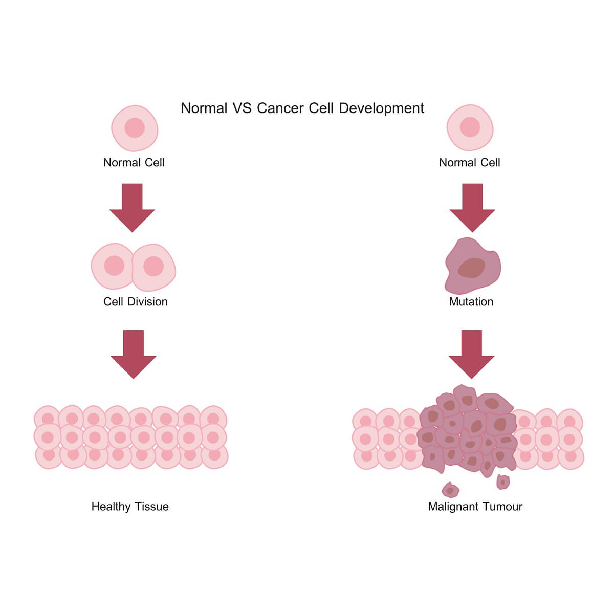 Cells with mutations in pathways controlling cyclins, CDKs, or other aspects of the cell cycle can often become cancerous