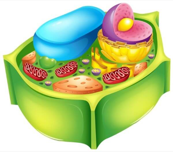 Organelles are also found in plant cells
