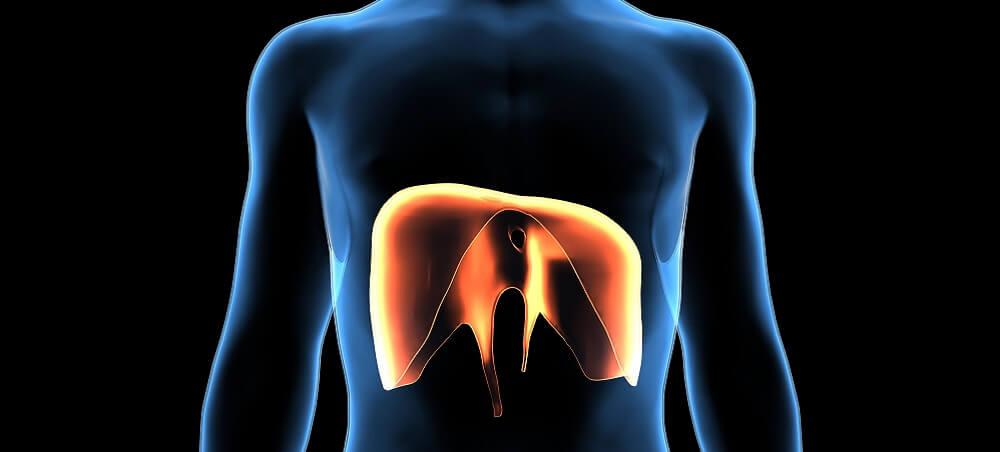 diaphragm muscle respiratory breathing phrenic nerve