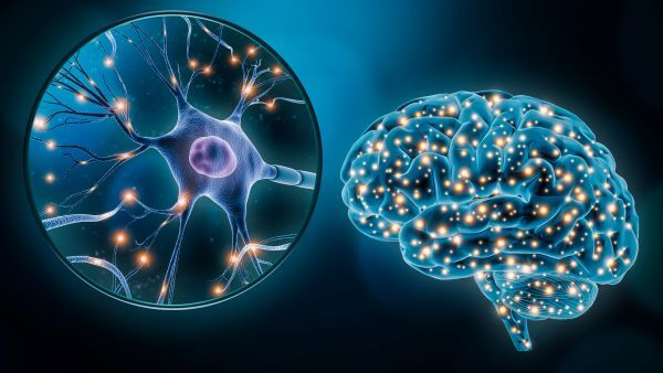 Brain Cells - The Definitive Guide | Biology Dictionary