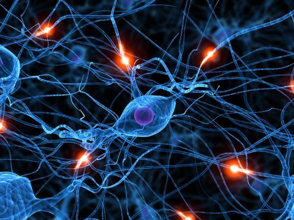 Cell body is the name of the spherical part of a nerve cell