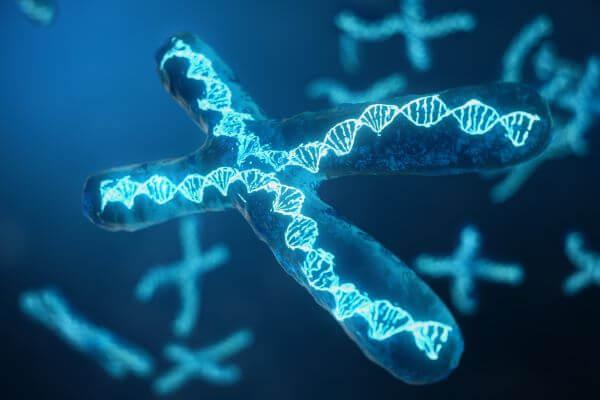 The 2n number of diploid cells varies from species to species