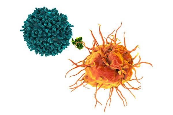 Langerhans cells present antigens to naive T cells