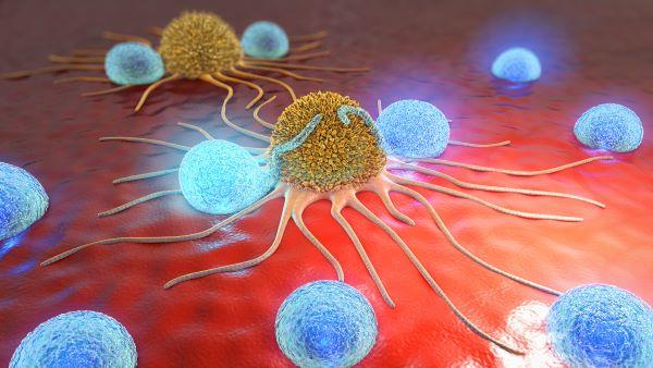 Natural killer cells target and destroy cancer cells