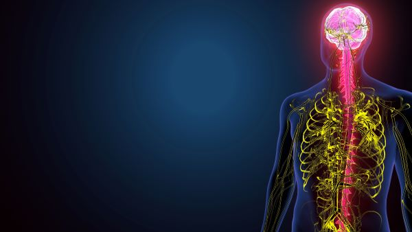 The nervous system allows us to interact with the world around us