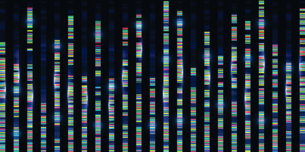 gene sequence DNA genome