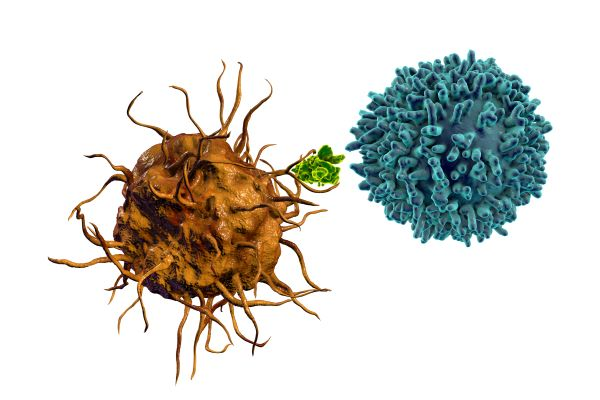 T cells are activated by antigen presenting cells