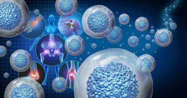 Adult stem cells are found throughout the body