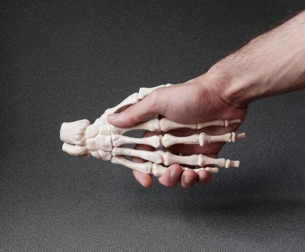 Bone cells are found in bone tissue