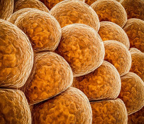 Brown fat cells have functions beyond energy storage