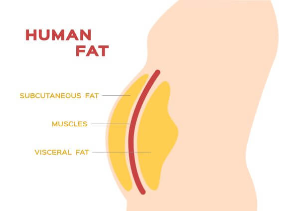 Fat cells are found in lots of parts of the human body