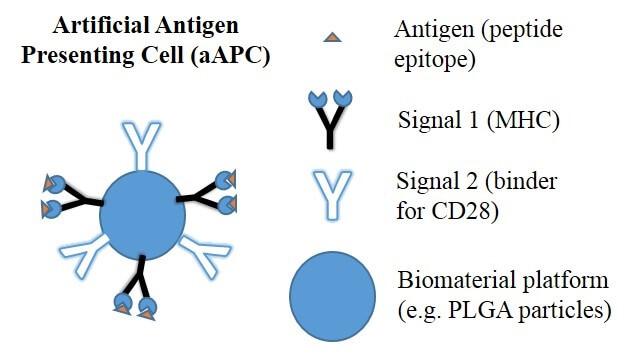 artificial antigen presenting cell aapc