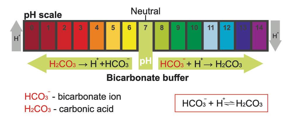 bicarbonate buffer system ph carbon dioxide sodium naco3 co2 blood