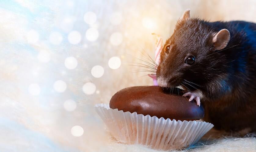 fat mouse glucose