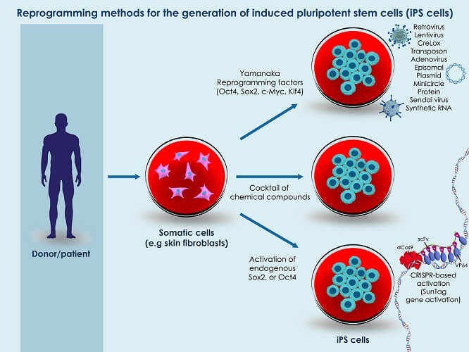 ipsc induced pluripotent stem cell