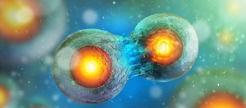 mitosis cell division cancer tumor