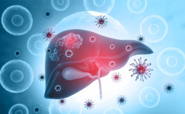 Kupffer cells are important in maintaining healthy liver function