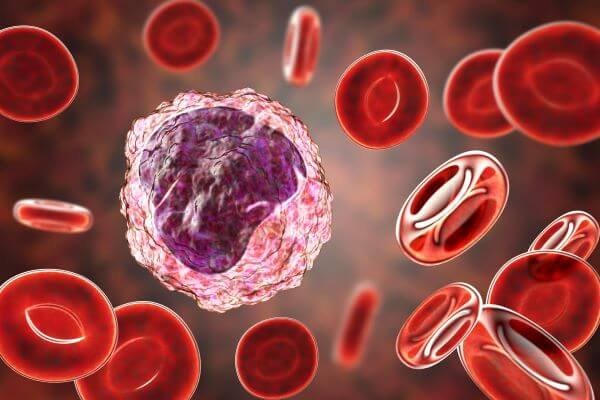 About 5% of all blood cells are monocytes