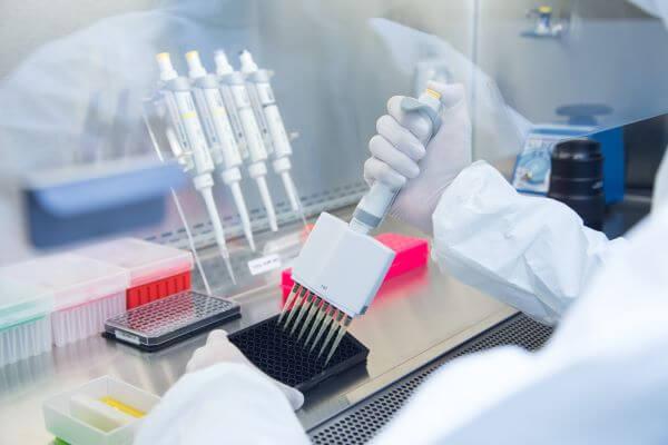 Mesenchymal stem cells have many uses in regenerative medicine