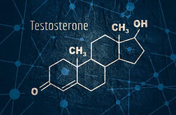 Leydig cells produce testosterone in male organisms