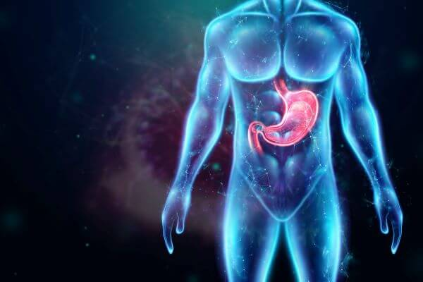 Guide cells secrete pepsinogen and gastric lipase in the stomach